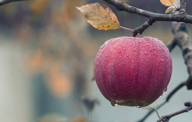 Kuvituskuva Omena